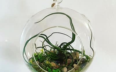 How to Make an Air Plant Arrangement in a Glass Globe