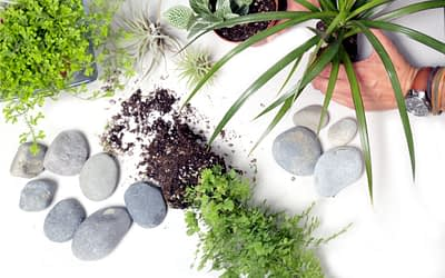 Interior Plant Design:  Placement with Sunlight